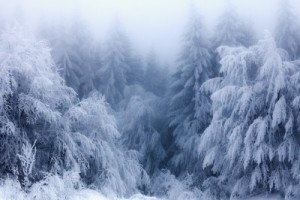 Perceived Southern Baptist Split on Global Warming Evaporating