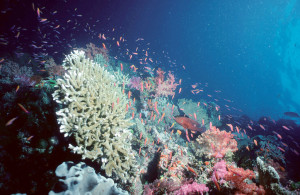 Coral Reefs and Global Warming: Another Eco-disaster Dwindles