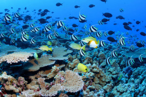 Ocean Acidification—Well, Maybe Not So Much