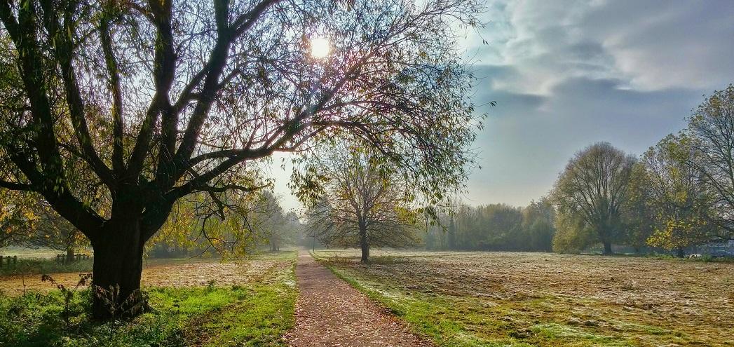unsplash peace field cropped