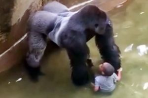 A Gorilla, A Boy, and the Decline of Human Dignity